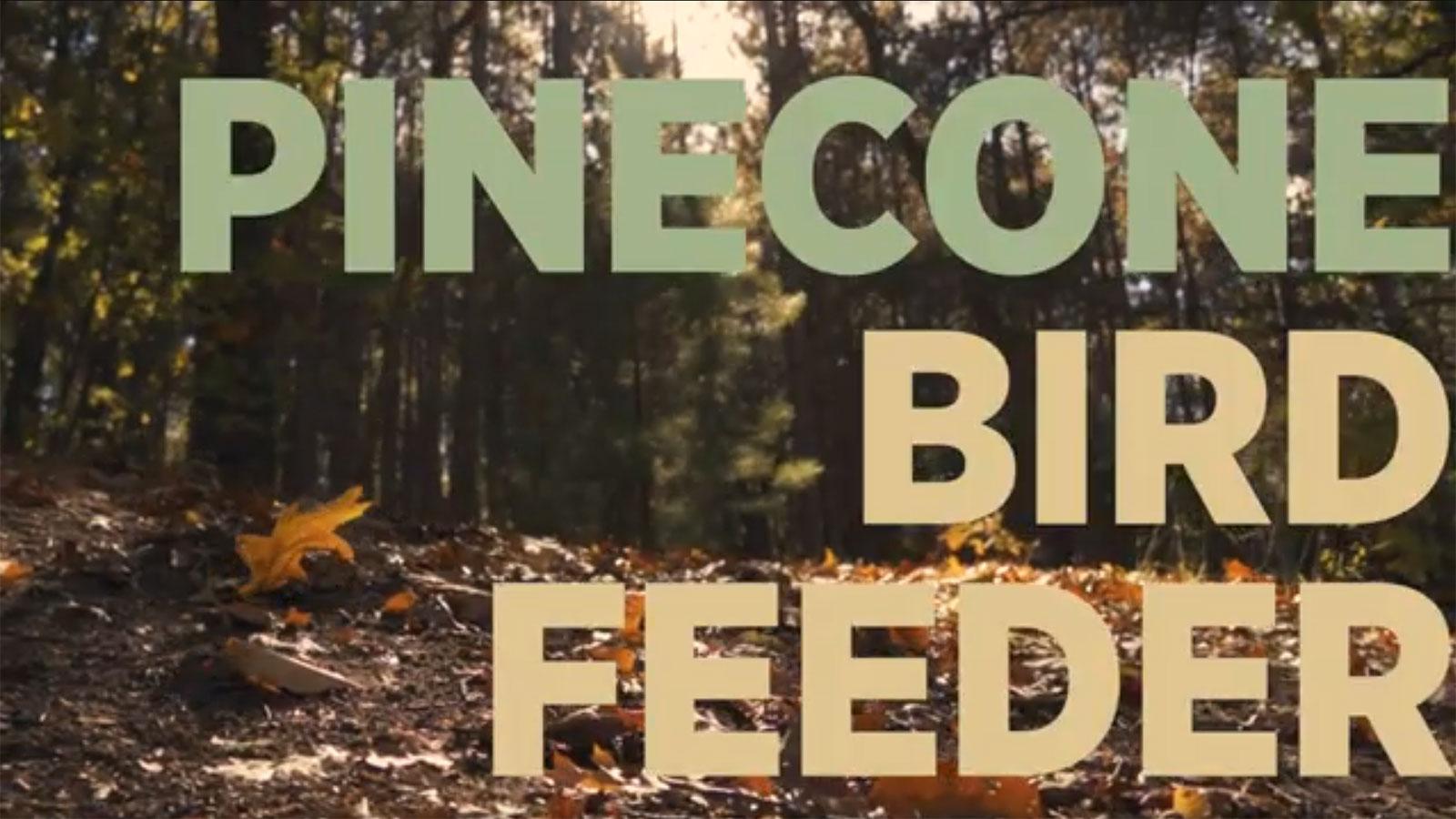 pinecone-bird-feeder-feat